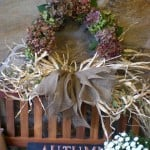 autumn wreath hydrangea