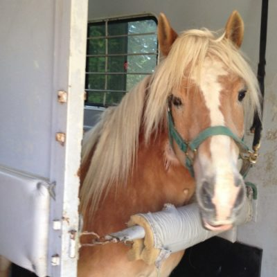 Our horse colic update at Tufts