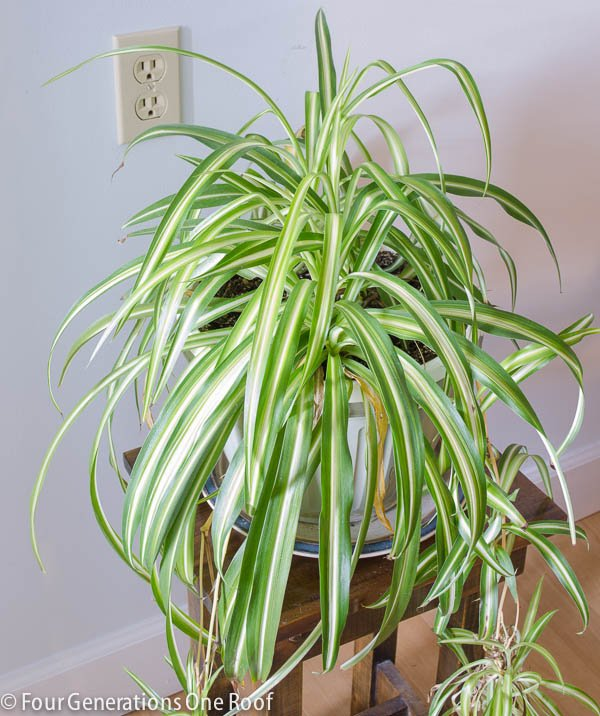 Common house plants my mom her plants page 5 of 8 four generations one roof - Most popular house plants ...