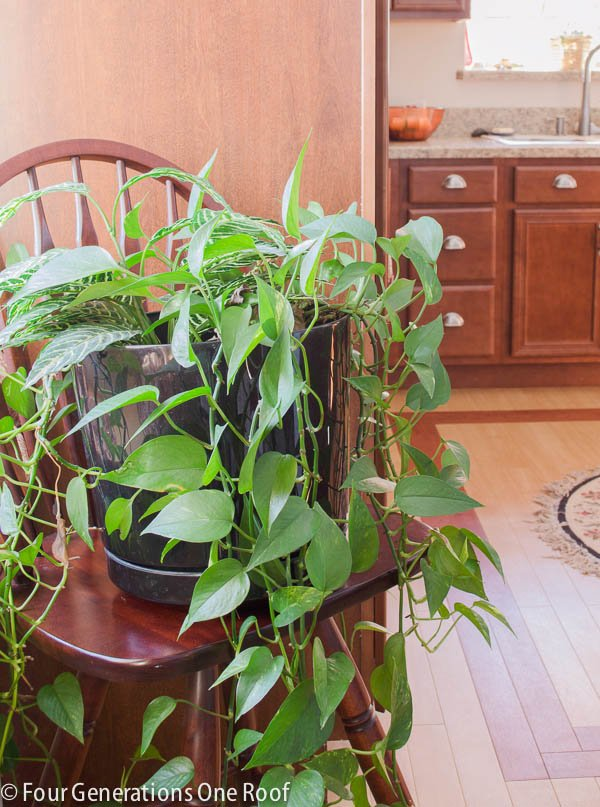 Common house plants my mom her plants four generations one roof - Most popular house plants ...