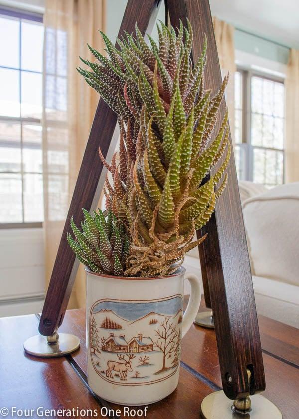 common house plants