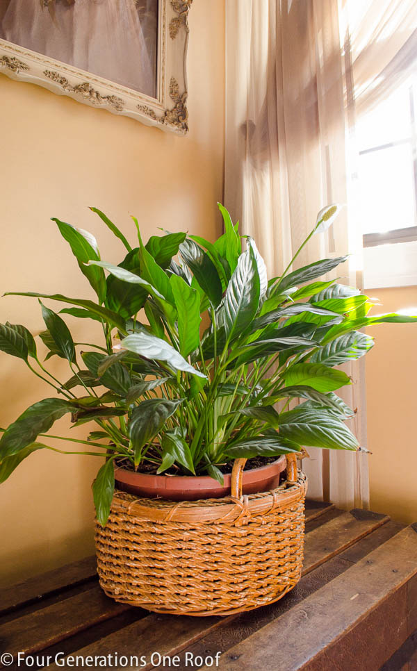 Common house plants my mom her plants page 7 of 8 four generations one roof - Most popular house plants ...