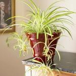 common house plant