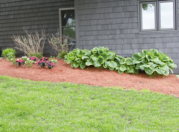 flower bed makeover before and after