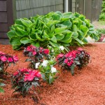 Flower Bed Makeover Before and After2
