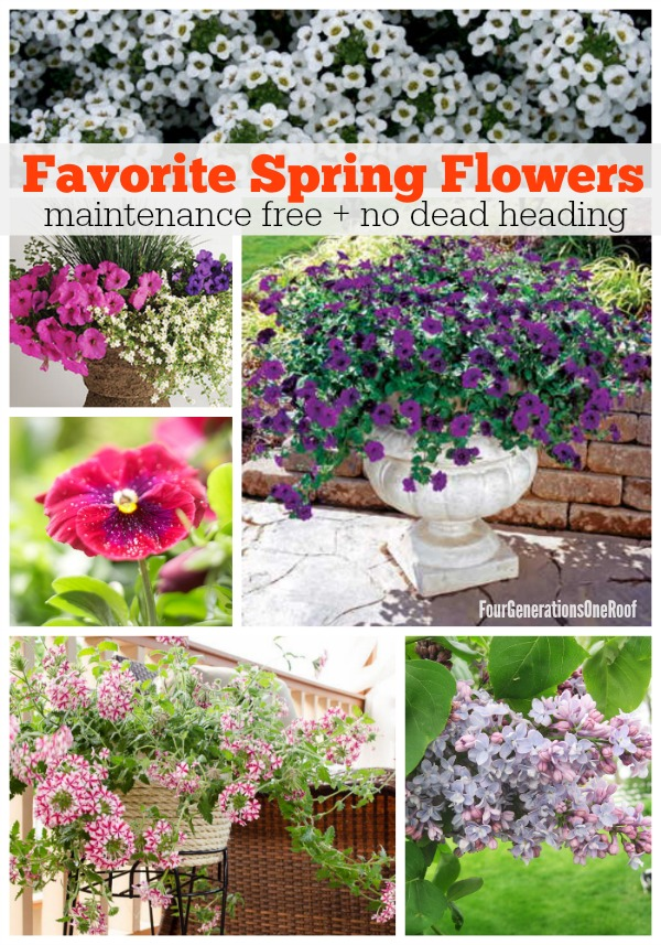 favorite spring flowers maintenance free + no deadheading