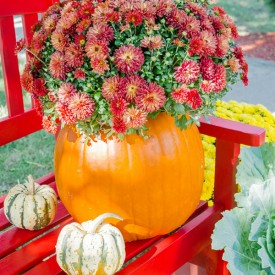 DIY Fall Pumpkin Planter