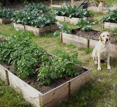 Easy-Cedar-Raised-Garden-Beds