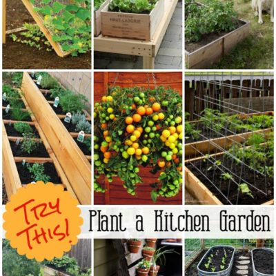 Grow a Vegetable Garden in containers