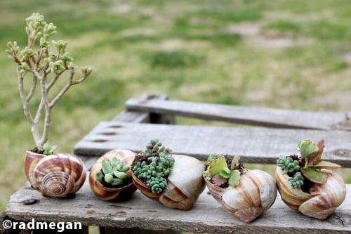 snail-shell-gardens