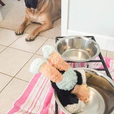 Meet our pup Garth + help raise money for assistance dogs