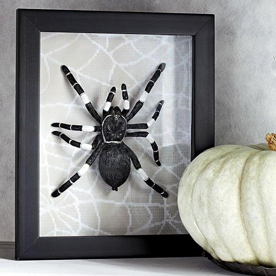 framed-spider