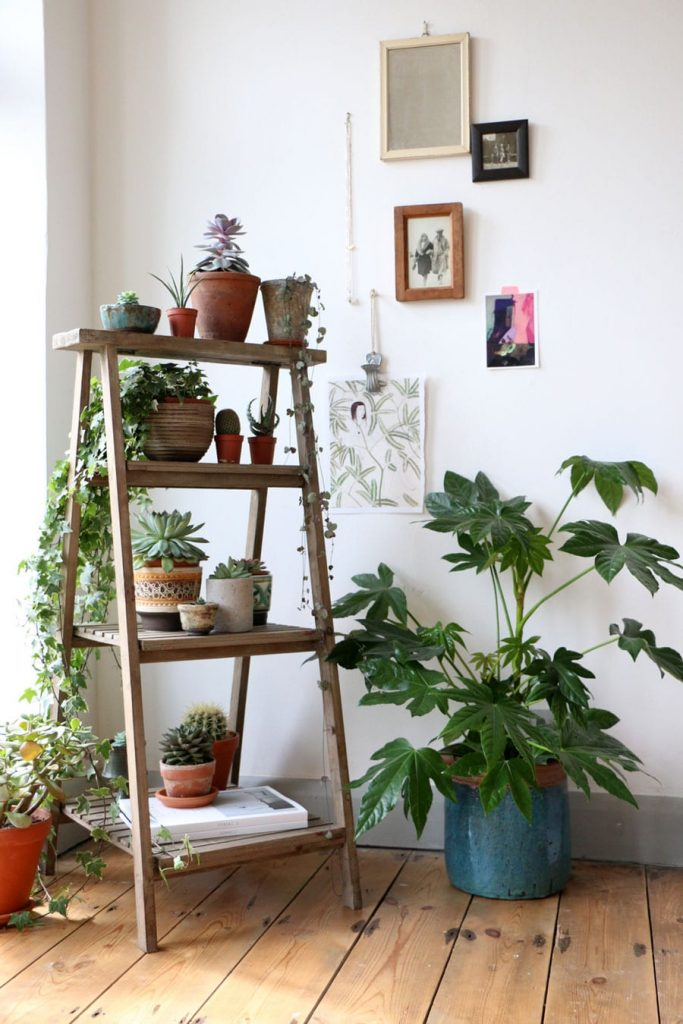 how to decorate plants