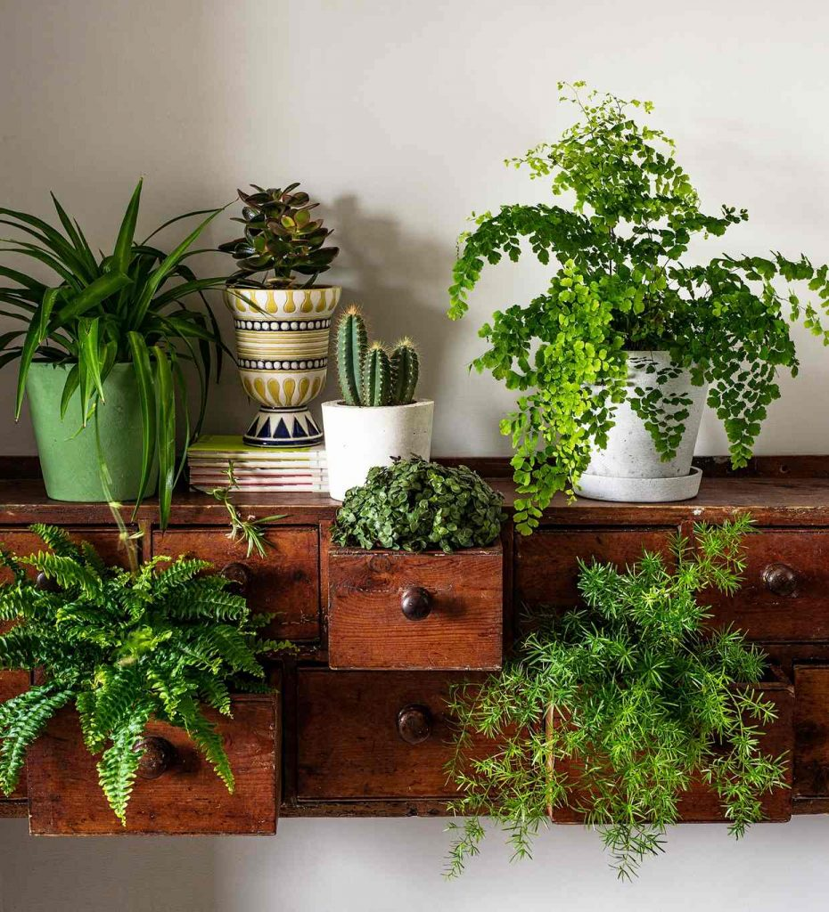 How to decorate with plants latest homegoods project - Decorate home with plants ...