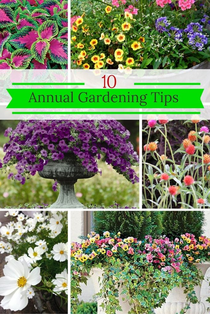 10 Fabulous Tips for Annual Flowers