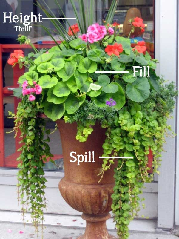 Height-Spill-Fill-Container-Gardening tips for annual flowers