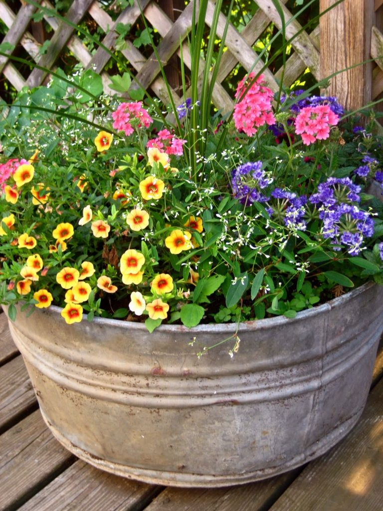 10 favorite tips for annual flowers four generations one Plants that love sun and heat