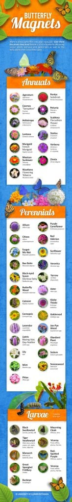 tips for annual flowers butterfly magnet flowers