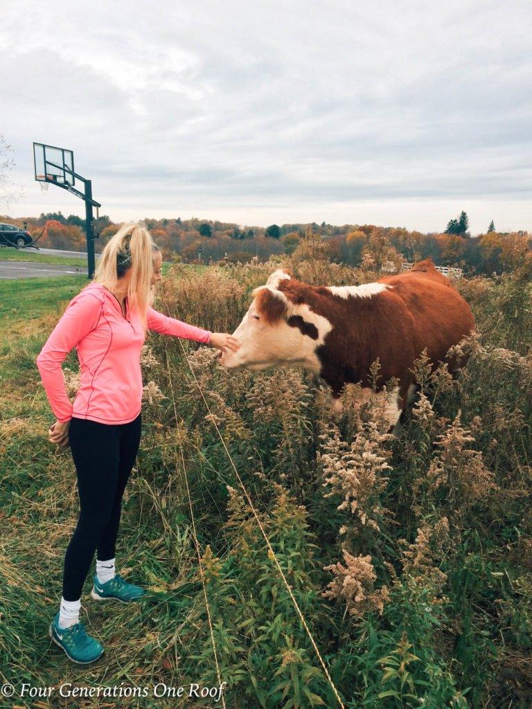 Jessica Bruno in a New England field with cows, Fall New England landscape