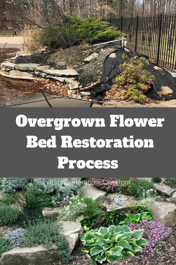 overgrown flower bed + hosta + ground cover