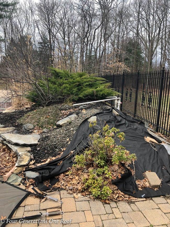 overgrown flower bed around inground pool -1