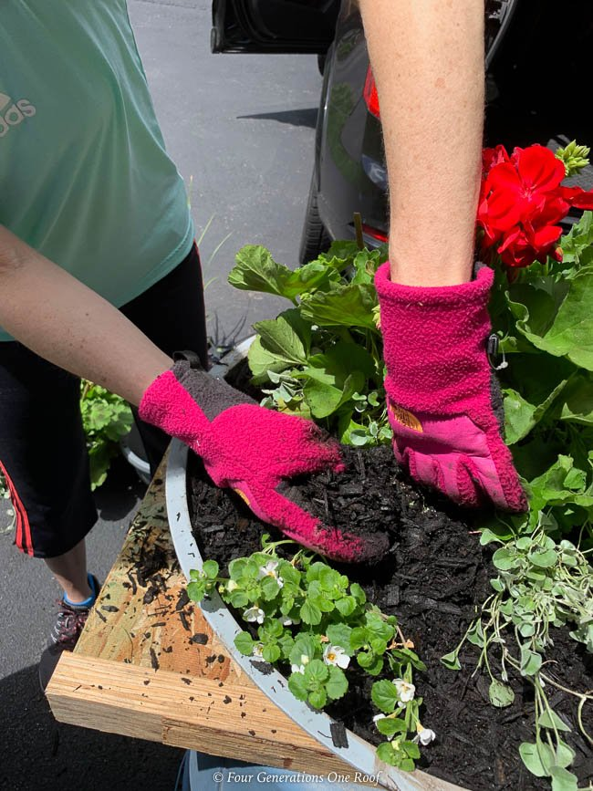 planting geraniums, ivy and bacopa in a bowl planter