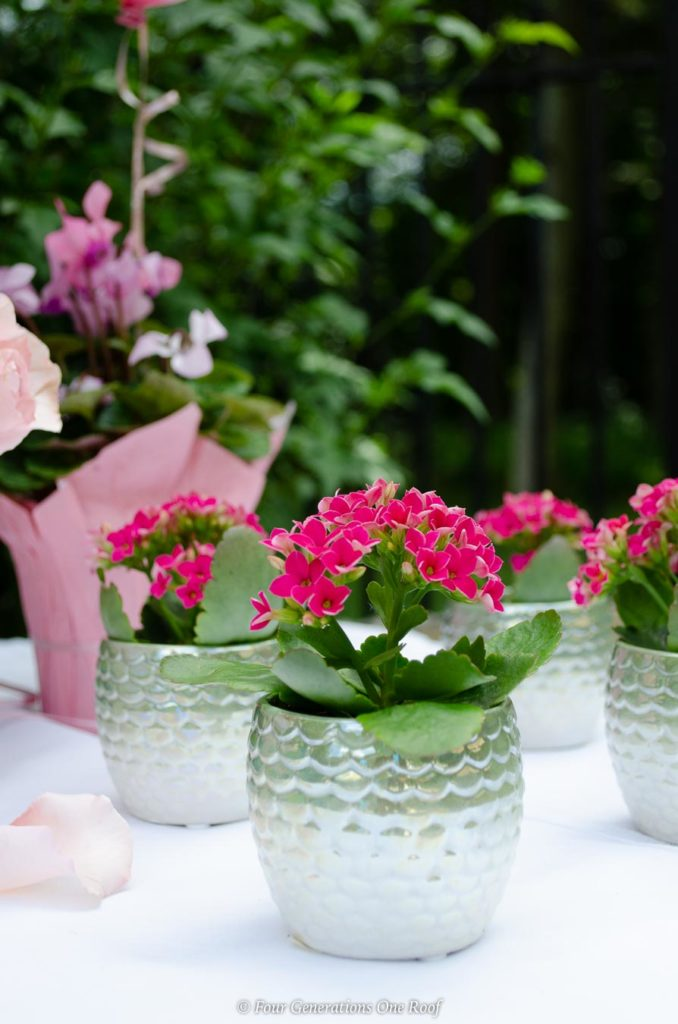 Bridal Shower Favor Ideas with a small plant on cake table
