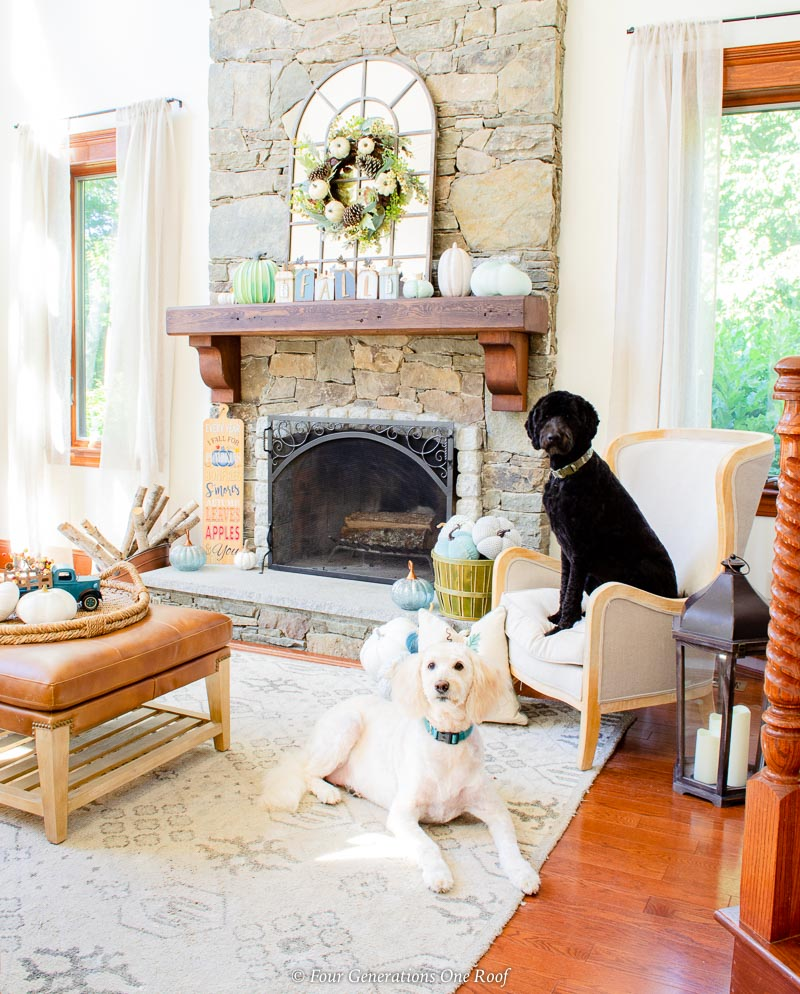 white and black goldendoodles, fireplace with blue and white pumpkins in basket with accent chair