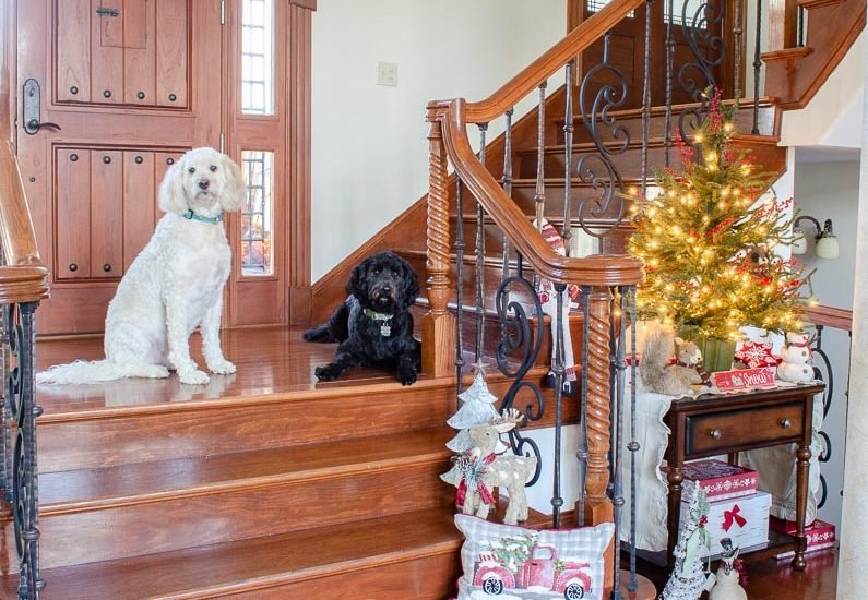 white and black goldendoodle, Christmas staircase